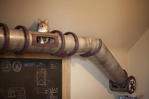 cat-tube-1