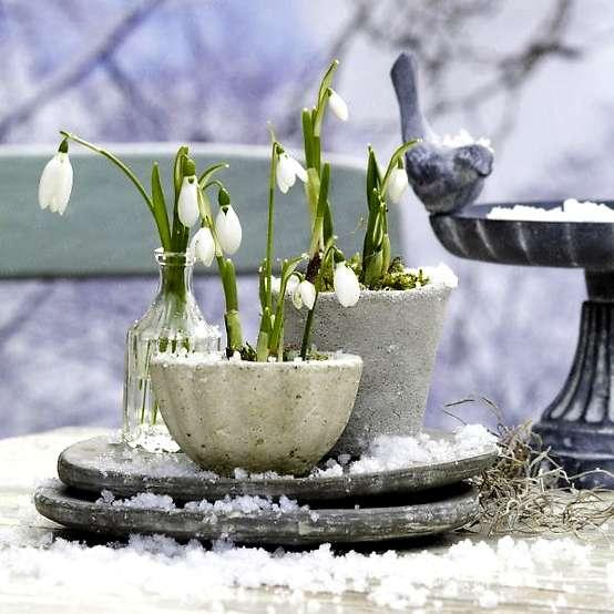 garden-winter-2